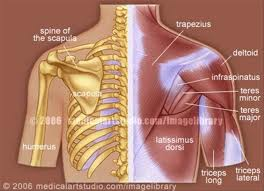 upper back pain muscles